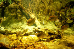 Under water. Different Fishes swimming under water Stock Image