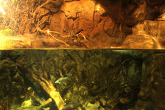 Under water. Different Fishes swimming under water Royalty Free Stock Images