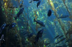 Under the water. Scenery with fish and seaweed Royalty Free Stock Photo