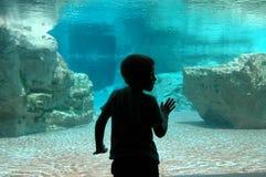 Under water boy. Boy standing in front of giant aquarium Stock Photo