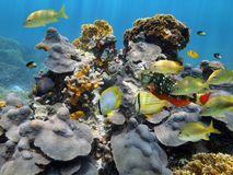 Under water coral and reef fish Royalty Free Stock Photo