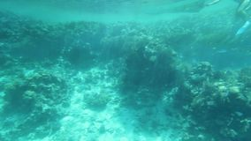 Under the water. Corals and marine life at the bottom of the Red Sea stock video footage
