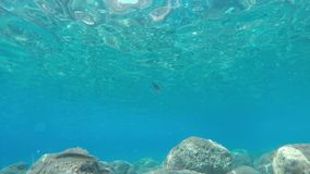 Under water fish scene. Clear underwater scene with fish stock footage