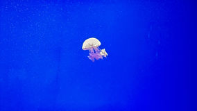 Under water jellyfish  Royalty Free Stock Photography