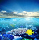Under water life Royalty Free Stock Photo