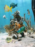 Under water marine life. With tropical fish and colorful sea sponges fixed on coral, Caribbean sea Stock Photography