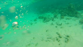 Under water ocean. Back to the Water Surface in the middle of the Ocean.  stock footage