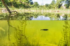 Under water and over water, Nationalpark Donau-Auen. Under water and over water. Nationalpark Donau-Auen. Natural scene Stock Photos