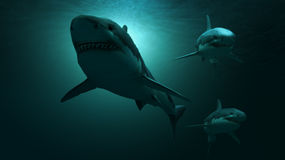 Under water sharks Royalty Free Stock Photography
