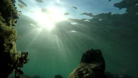 Under water sun light shimmer. Shimmering under water sunlight with rock formation stock video