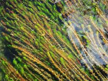 Under water vegetation - 1 Stock Images