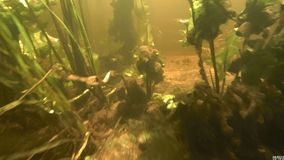 Under water view of the. Lake. The under the water view of a river, not so clean. Small fish swim stock video