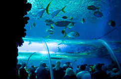 Under water world Royalty Free Stock Photos