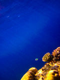Under water world at Maldives Stock Images