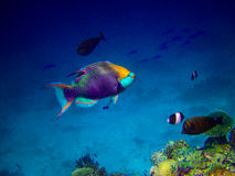 Under water world at Maldives Royalty Free Stock Photography
