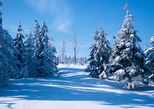 Under the weight of snow. Illustrations,forests landscape stock images