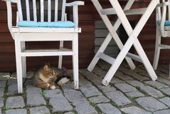 The cat lies under the white chair. royalty free stock images