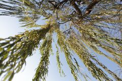 Under the willow tree branches. Under the willow tree stock photo