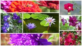 Underbar blommacollage arkivfilmer