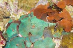Underbar färgrik korall Royaltyfri Foto