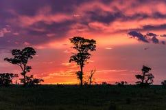 Underbar färgrik solnedgång på bygd fotografering för bildbyråer