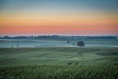 Underbar gryning på det dimmiga fältet i sommar royaltyfria bilder
