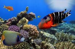 Underbar och härlig undervattens- värld med koraller och tropica Arkivfoton