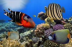 Underbar och härlig undervattens- värld med koraller och tropica Royaltyfria Bilder