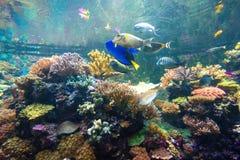Underbar och härlig undervattens- värld med koraller och tropica Arkivfoto