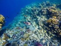 Underbar och härlig undervattens- värld med koraller och tropica royaltyfri fotografi