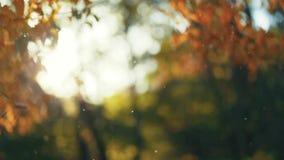 Underbar sikt av höstsolljus i den orange skogen utanför skytte naturlig skönhet asters magentafärgade många för höst moodpink arkivfilmer