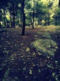 underbar skog royaltyfria foton