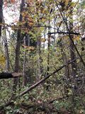 Underbar skog i höst royaltyfri bild