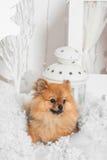 Underbar valp som ligger på snön och ser bort i studio Royaltyfri Bild