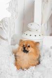 Underbar valp som ligger på snön och ser upp i studio Arkivfoto