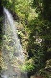 Underbar vattenfall i Forest Of Los Tilos On ön av La Palma Lopp natur, ferier, geologi Juli 8, 2015 Isla De fotografering för bildbyråer