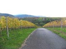 Underbar vinregion i bergen royaltyfri fotografi