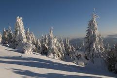 Underbar vinter Royaltyfri Bild