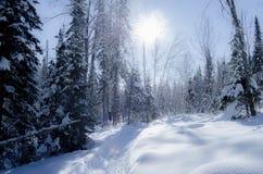 underbar vinter Royaltyfri Foto