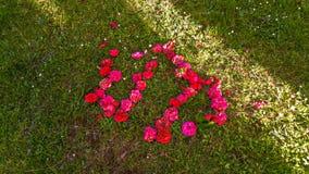 Underbara blommor från madeiraön Royaltyfri Fotografi