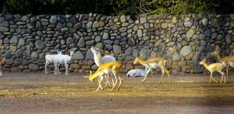 Underbara deers i skog på gryning i Indien arkivfoto