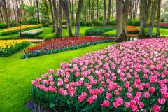 Underbara färgrika nya tulpan i Keukenhof parkerar, Nederländerna, Europa Arkivbild