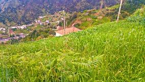Underbara landskap från madeira Arkivfoto
