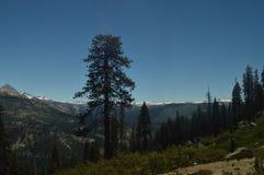 Underbara sikter av en Forest From The Highest Part av ett av bergen av den Yosemite nationalparken Naturloppferier Royaltyfri Fotografi