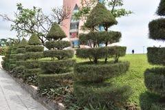 Underbara små träd med en special design på vägen i Nha Trang i Vietnam, Asien arkivfoto