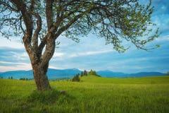 Underbara Spring Valley i ett aftonljus Arkivbild