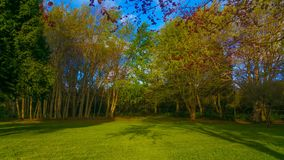 Underbara trädgårdar från madeira Royaltyfri Fotografi