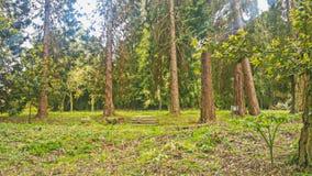Underbara trädgårdar från madeira Arkivbild