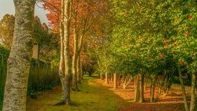 Underbara trädgårdar från madeira Arkivfoton