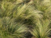 Underbart dekorativt gräs arkivbilder
